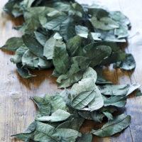 Luscious Leaf Vase Filler green
